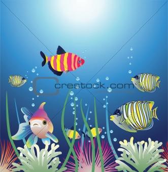 aquarium and colorful fishes
