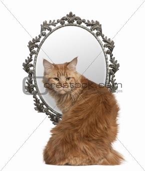 Cat looking back with a mirror in background