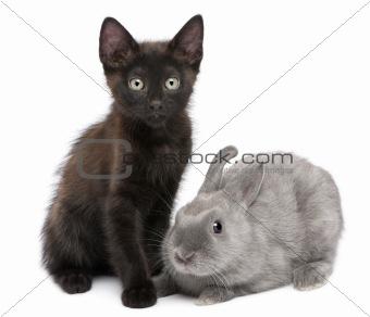 Portrait of black kitten