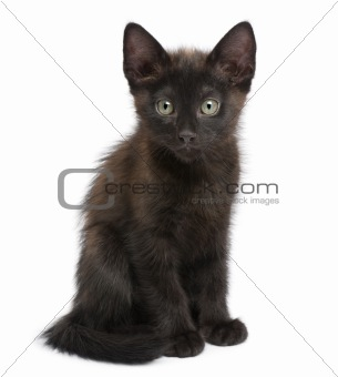 Portrait of black kitten