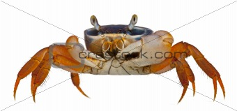 Patriot crab