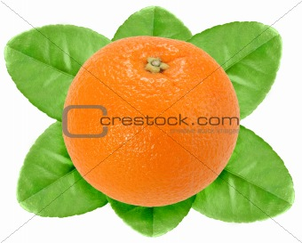One fruit of orange with green leaf