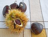 Chestnuts on tablecloth.