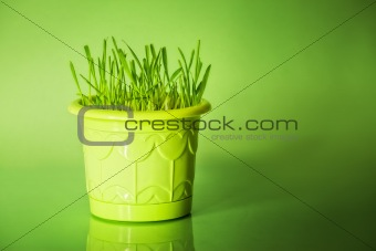 Green grass in flowerpot on green background