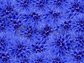 blue spring flowers floral background