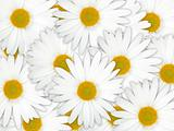 Abstract background of white flowers