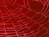 Redtoned Spider Web Covered with Sparkling Dew Drops