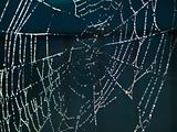 Spider Web Covered with Sparkling Dew Drops