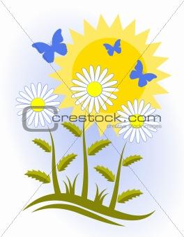 daisies, butterflies and sun