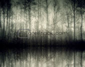 Nebel forest