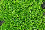 Salad texture