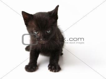 Black cat kid