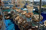 Sea shell store