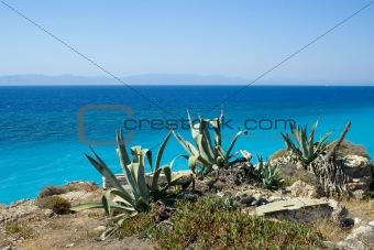 Cactus on seaside