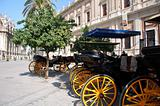 horses and carriages for sightseeing in Seville, Spain