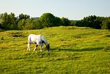 Beautiful Horse Grazing on Farmland