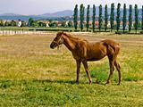 Horse pose 1