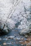 Snow fall along Little Pigeon River