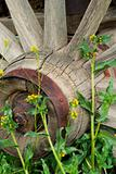 Wagon wheel and yellow flowers