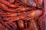Crayfish background