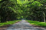 Oak cover road