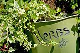 Herbs Pot