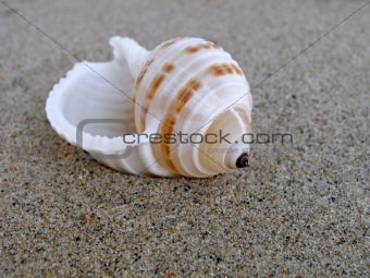 Close up shot of shell on the beach