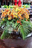 Orange tropical flowers.