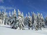 winterforest in the  mountains