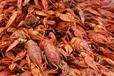Fine boiled crayfishes