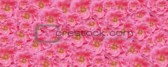 pink rose texture wallpaper floral backdrop