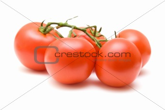 branch of vine tomatoes isolated on white