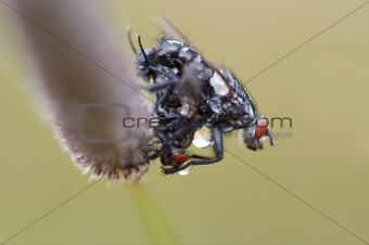 wetted flies