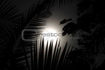 Palm Leaf - Bigodi Swamps - Uganda