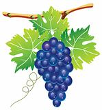 grape cluster and green leaves