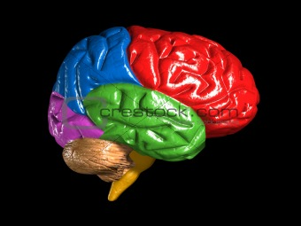 Make 3D Brain Model http://www.crestock.com/image/3204150-colorful-brain-model.aspx
