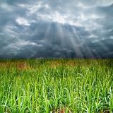 The grass fields under a cloudy sky