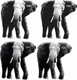 Elephant Halftone Clipart