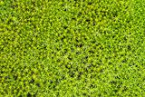 Soil with green northern moss - background