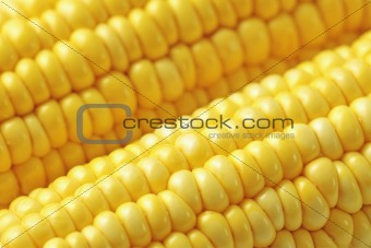 sweet corn background