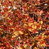 Orange, Yellow, and Red Leaves as a Background