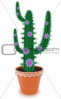 pot cactus with blue flowers