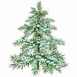 The Winter Christmas tree.