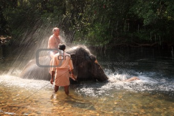 Tourist being sprayed by an elephant
