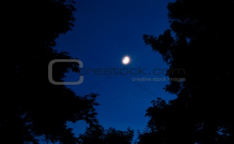 A Half Moon in the Night Sky Surrounded by Trees