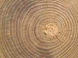 Wood Center MACRO showing RIngs and Details