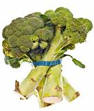 Healthy Broccoli Stalks