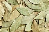 dry bay leaves background