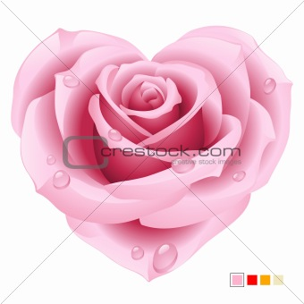 Pink rose in the shape of heart