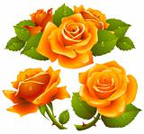 Orange roses set